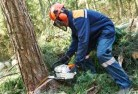 Abermain Tree felling services 21