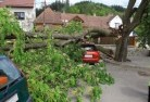 Abermain Tree felling services 41